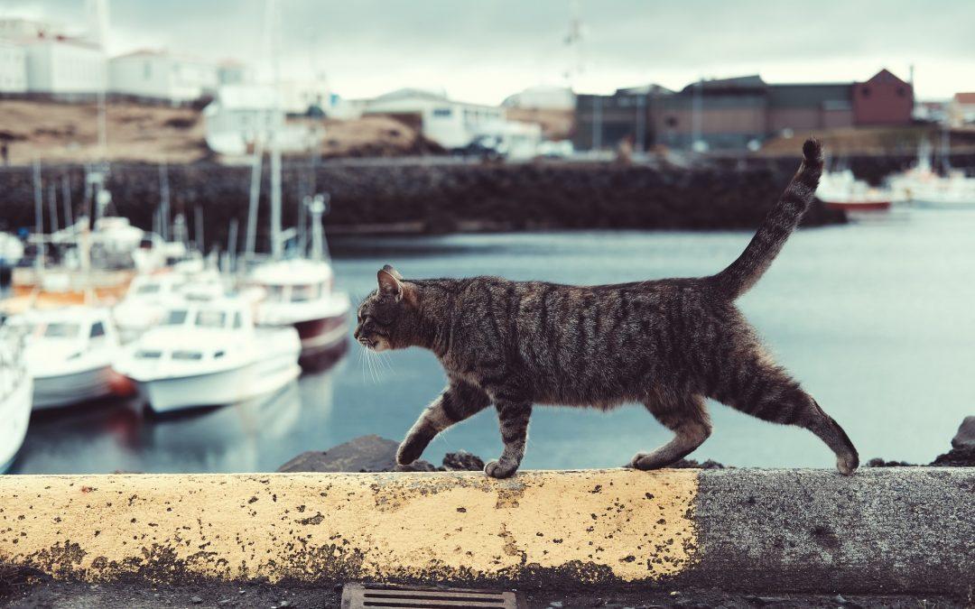 Allenare la resilienza accanto agli animali